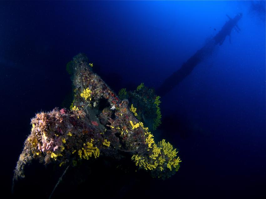 Francesca di Rimini / Kaprije / Najada Diving, Francesca da Rimini,Kroatien,Wrack,Aufbauten,bewachsen,Korallen,weich,hart
