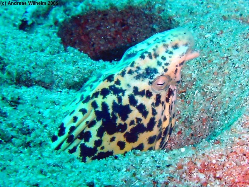 Nayel´s Reef, Nayel´s Reef,Jordanien