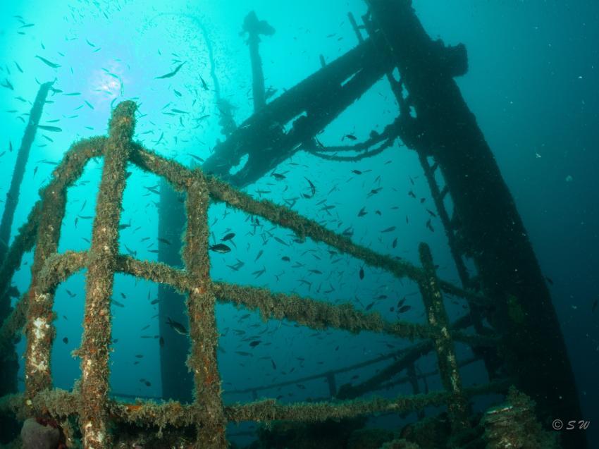 Peltastis, Wrack, Peltastis, Styria Guenis Diving Center, DIE Tauchbasis auf der Insel Krk, DIE Tauchbasis auf der Insel Krk, Styria Guenis Diving Center, Kroatien