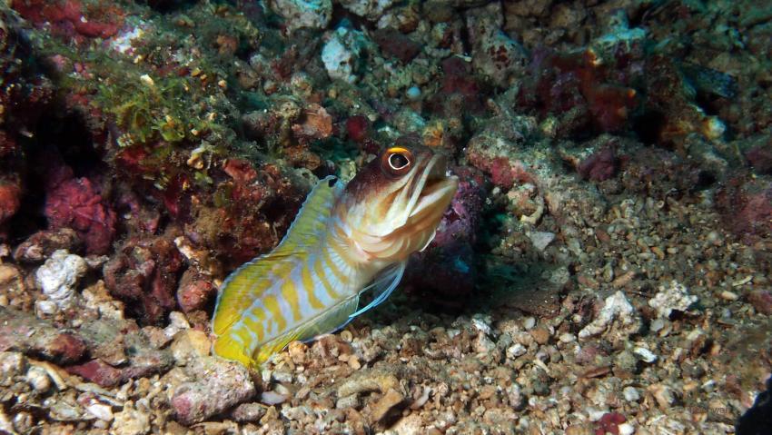 Entlang der Manado-Bucht (mit Tasik Divers), Manado-Bucht Festland,Indonesien,Brunnenbauer,Brunnbauer