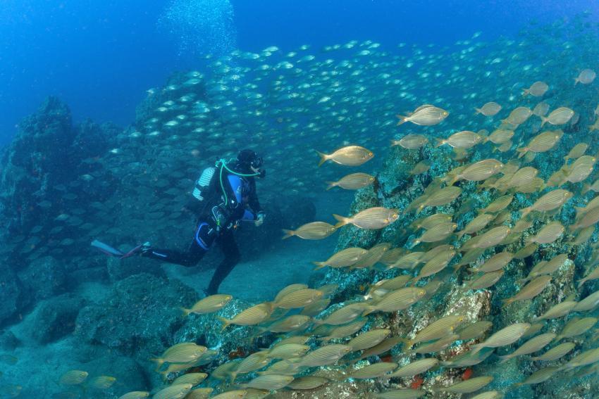 Fischsuppe, Fischschwarm, Manta Diving Madeira, Caniço de Baixo, Portugal, Madeira