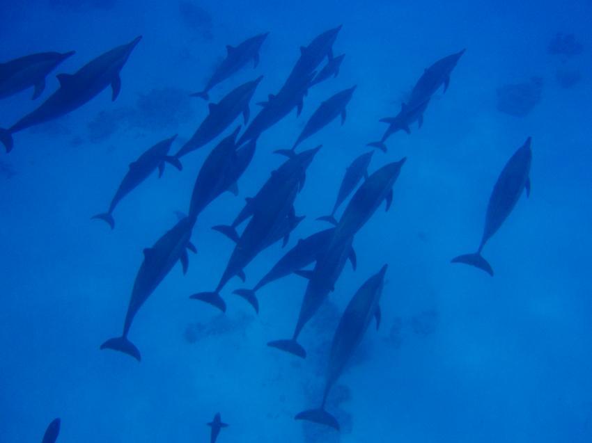 Sea World Diving Center, Marsa Alam, Ägypten, Marsa Alam und südlich