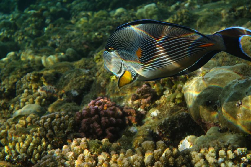 Schnorchelbild, Coraya Divers, Coraya Beach, Marsa Alam, Ägypten, Marsa Alam und südlich