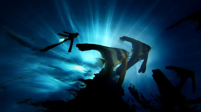 Euro-Divers, Utopia Beach, Ägypten, El Quseir bis Port Ghalib