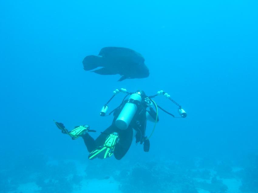 Südtour Divers Heaven Fleet, Südtour,Ägypten,Napoleon,Taucher mit UW-Kamera fotografiert