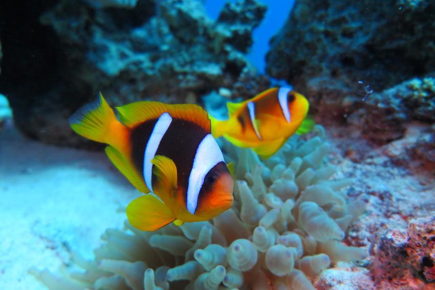 Soma Bay, Tauchen Ägypten Soma Bay, Scuba World Divers Soma Bay, Caribbean World Resort, Ägypten, Safaga