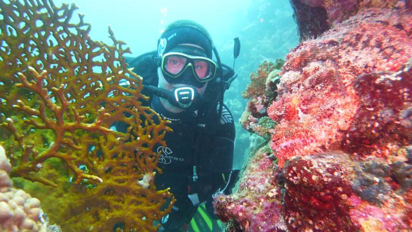 Wo ist der Fisch?, Wonderful Dive, Akassia LTI & Calimera, Ägypten, El Quseir bis Port Ghalib