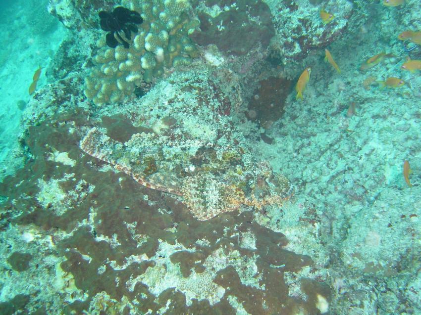 Coco Palm (Baa Atoll), Coco Palm (Baa Atoll),Malediven