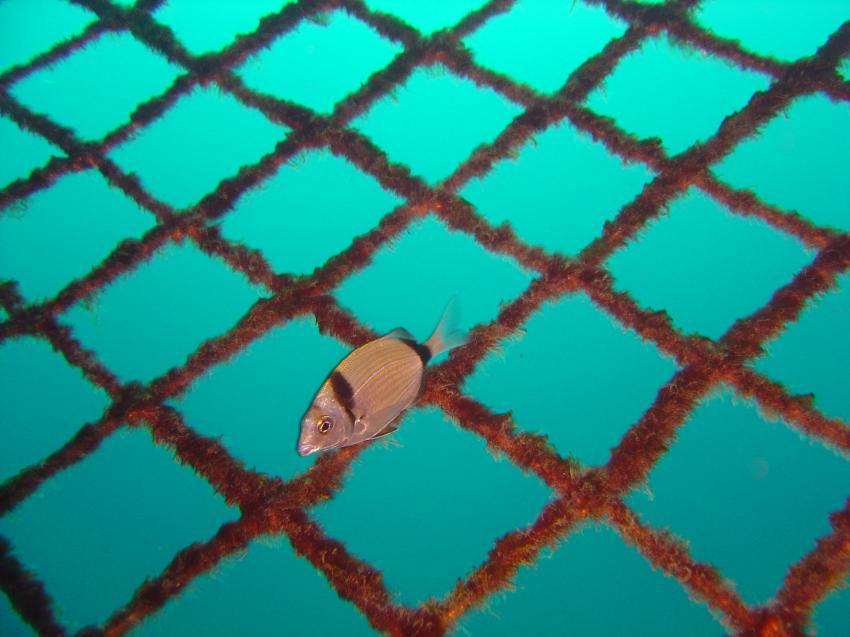 Ton Fisch Farm, Ton Fisch Farm,Hergla,Tunesien