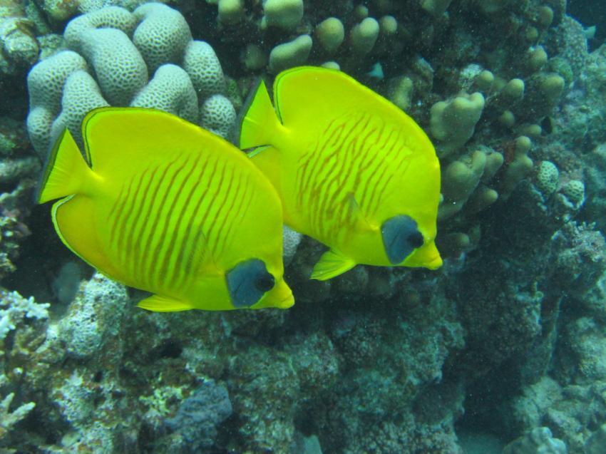 Teamarbeit, diving.DE Abu Dabab, El Malikia Resort, Ägypten, Marsa Alam und südlich