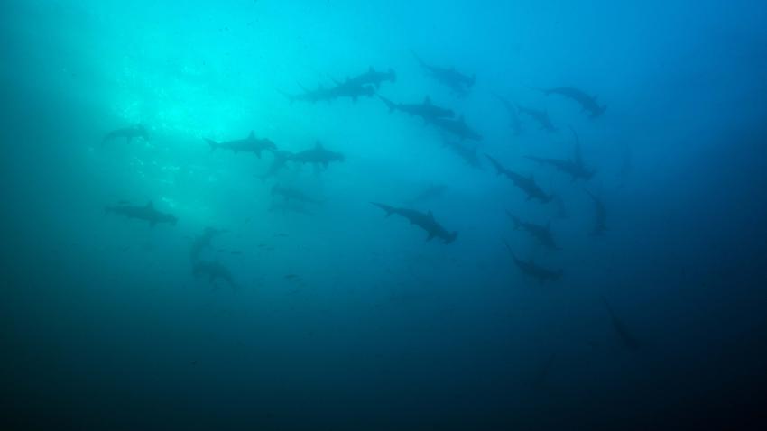 Galapagos Juli, Galapagos,Ecuador