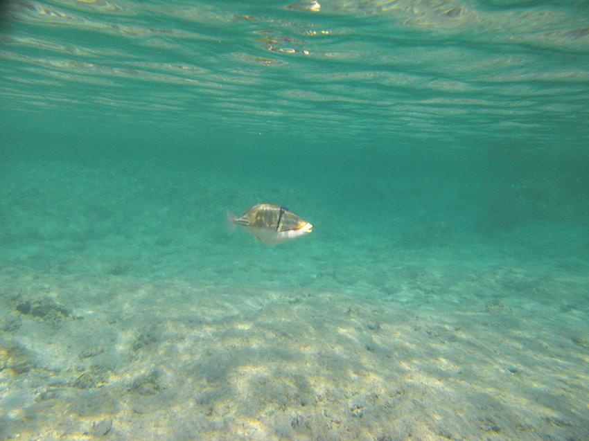 Hausriff Cinderella Beach, Hausriff Cinderella Beach,Ägypten