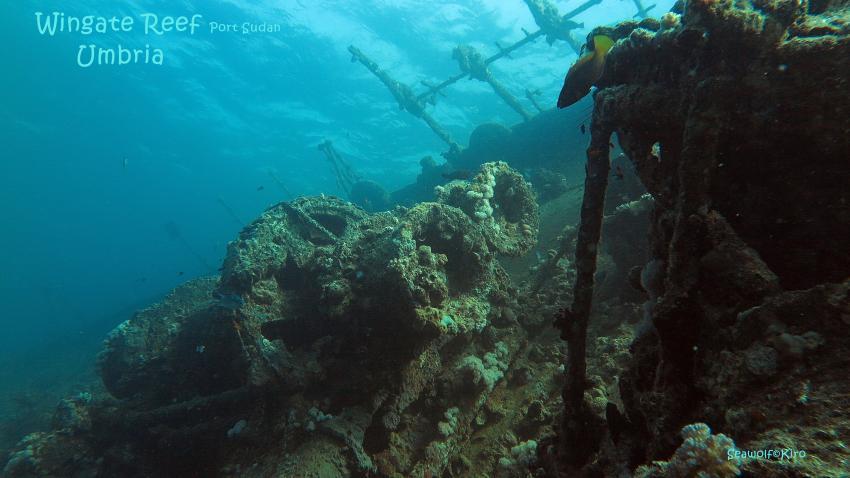 Umbria, Umbria, Wrack, Sudan, Port Sudan, Seawolf Diving, Safari Dominator, Hans Hass, Umbria - Wingate Reef, Sudan