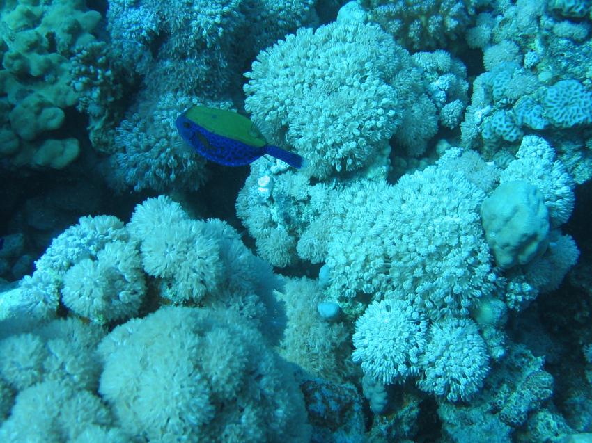 In Fughani, Euro-Divers, Utopia Beach, Ägypten, El Quseir bis Port Ghalib