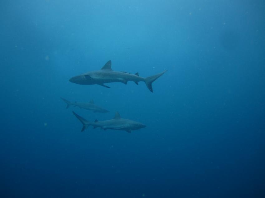 Haie ziehen ihre Kreise