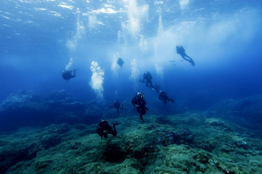 tauchen azores, Best Spot Azores Dive Center, Portugal, Azoren