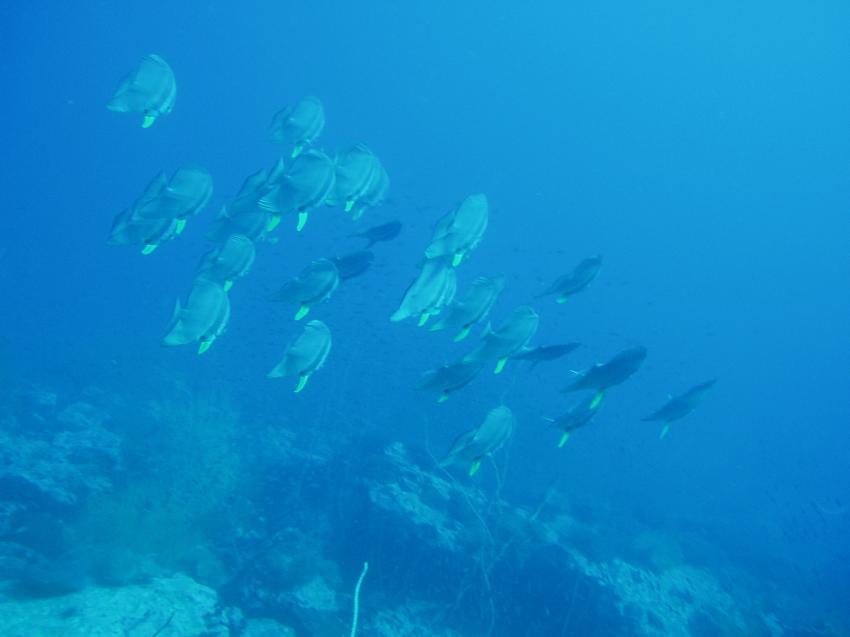 Koh Tao South West Pinacle, Southwest Pinnacle; Shark Island; Sails Rock,Koh Tao,Thailand