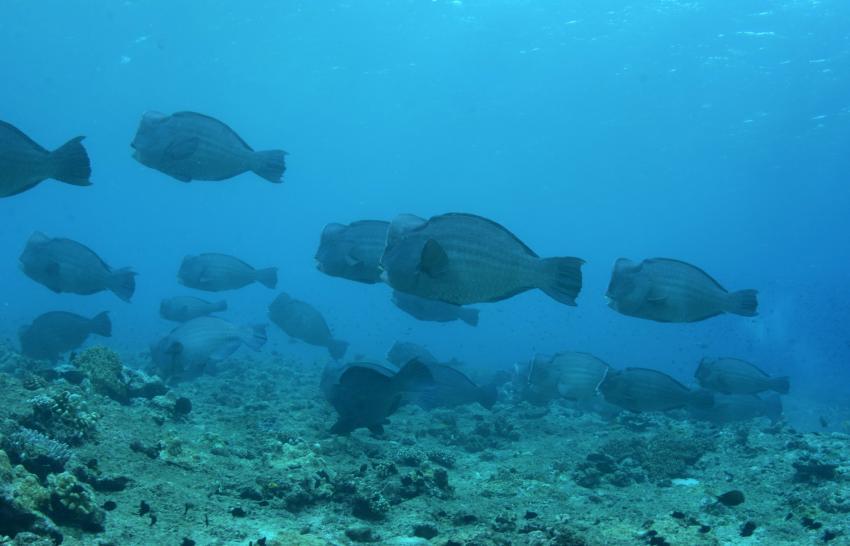 Bluemotion, Banda Inseln, Indonesien, Allgemein