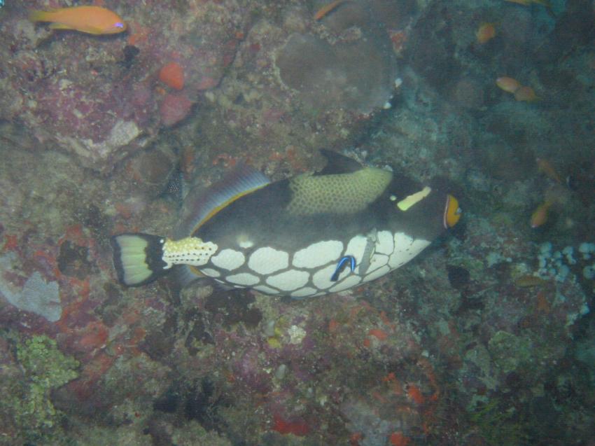 Velidhu (Nord Ari Atoll), Velidhu,Malediven
