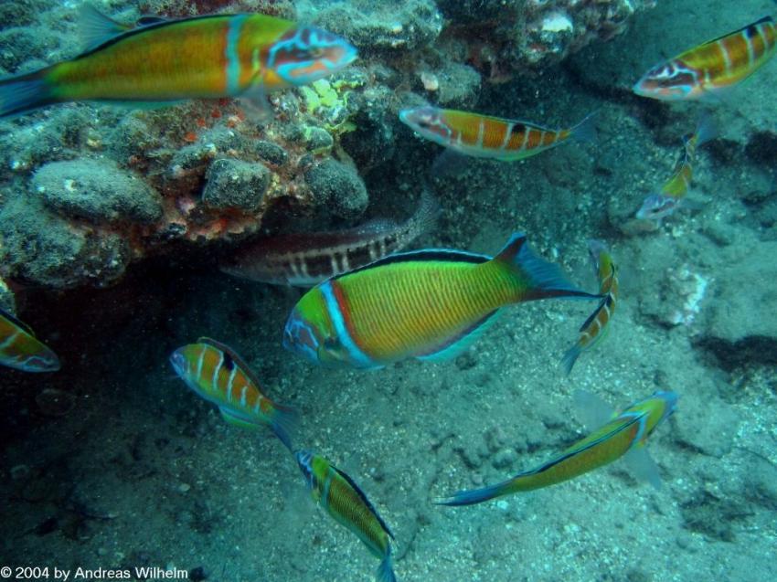 Fuerteventura - Chupadero Süd, Fuerteventura - Chupadero Süd,Spanien