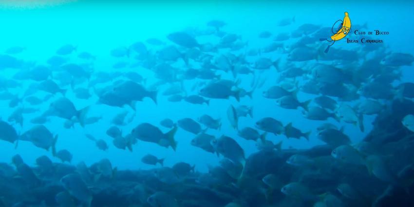 Punta Prieta, Teneriffa, Spanien, Kanarische Inseln