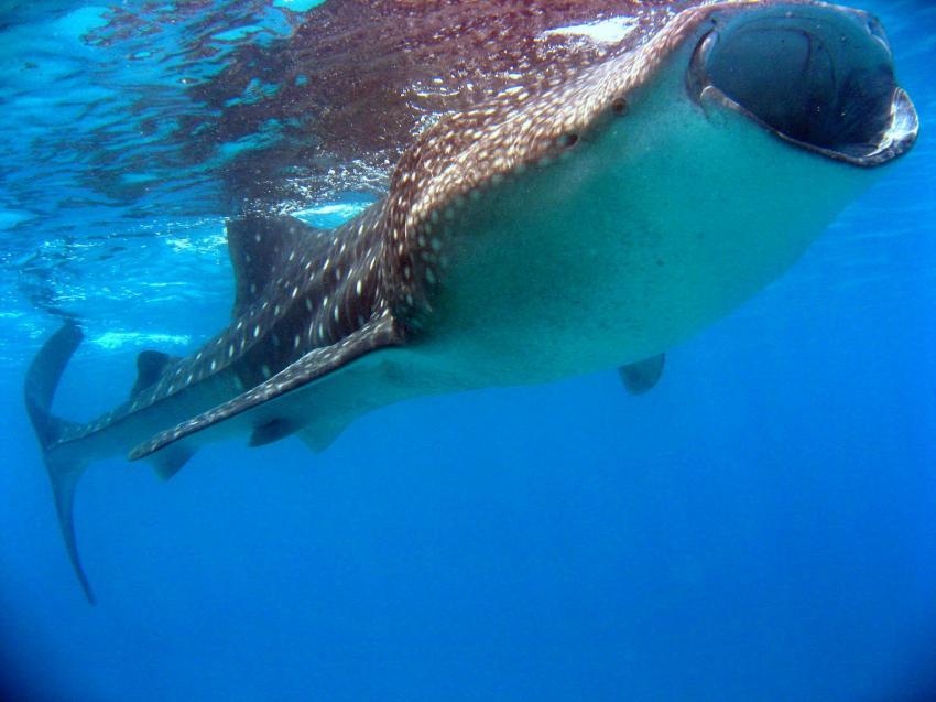 Eine Safari auf der Nautilus One, Ari Atoll,Malediven