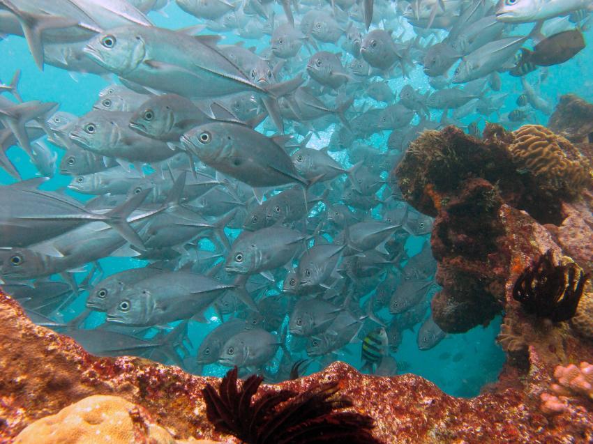 Water Worx Dive Center, Padang Bai, Bali