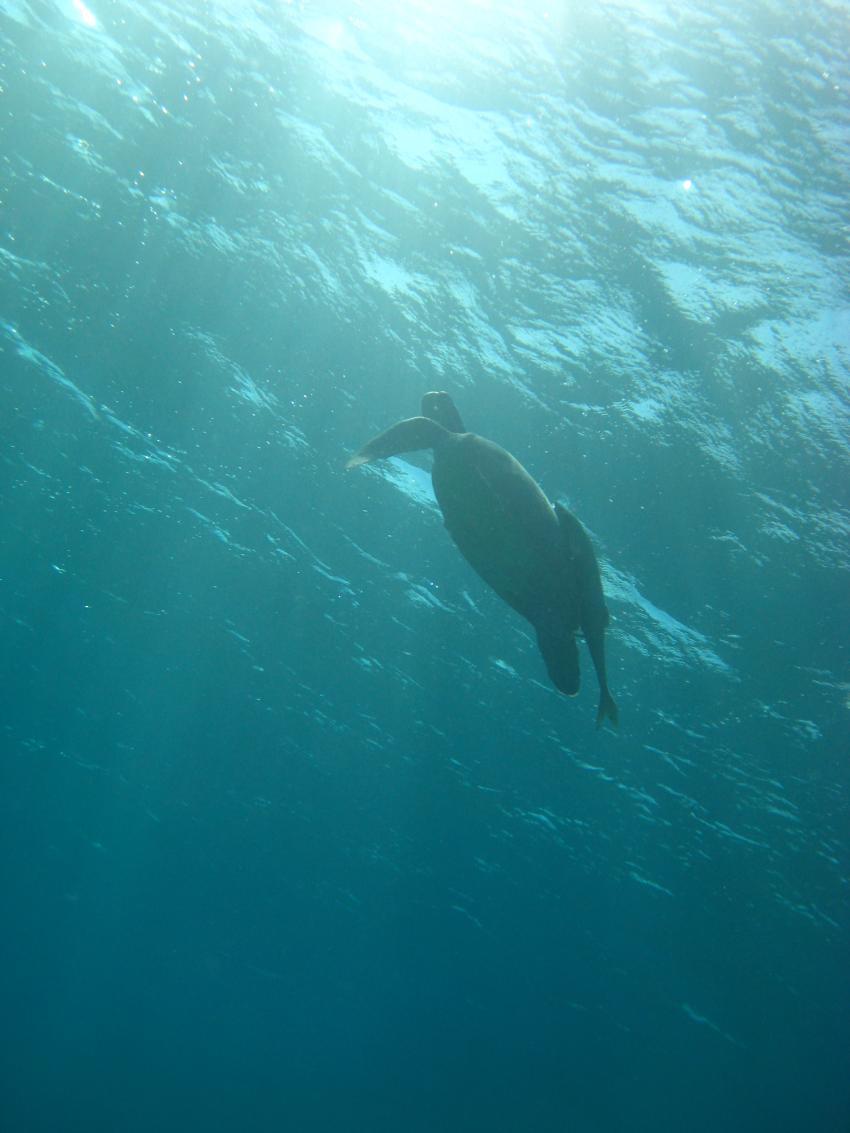 Schildkröten und andere Meeresbewohner