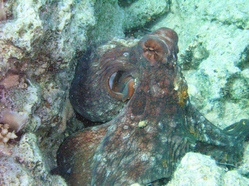 Tauchen in Hurghada, Pro Scuba Diving (ex Cupidon DC),Dana Beach Resort,Hurghada,Ägypten