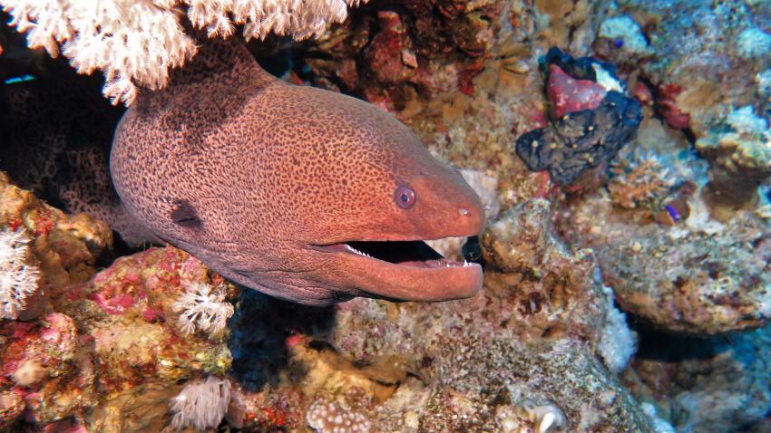 Circle Divers, Badawia Hotel, Ras Um Sid, Sharm El Sheikh, Ägypten, Sinai-Süd bis Nabq
