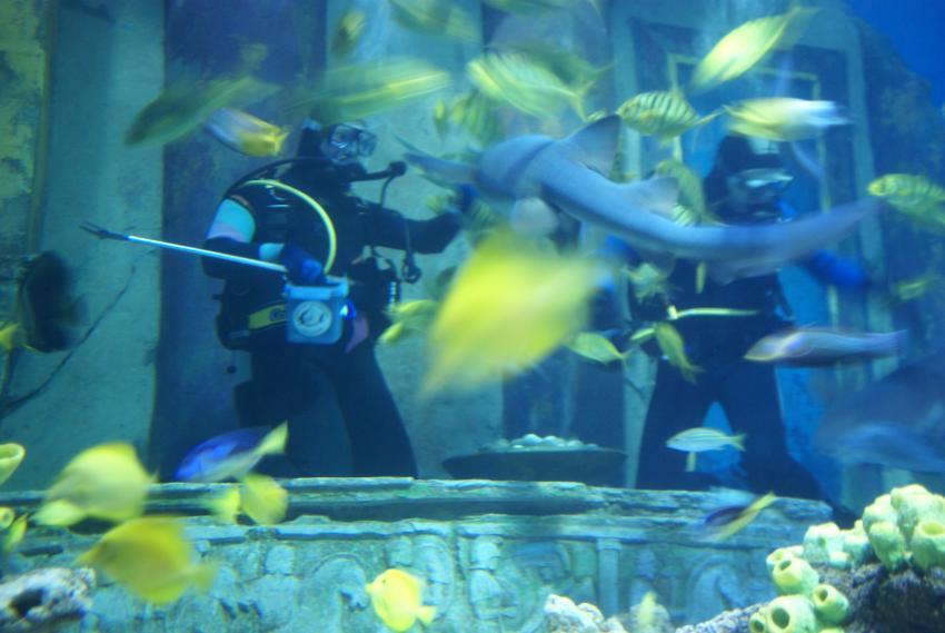 Im Sea Life München, Sea Life München (High Life Divers),Bayern,Deutschland