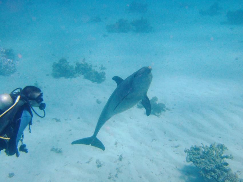 Shams Safaga Diving Center, Safaga