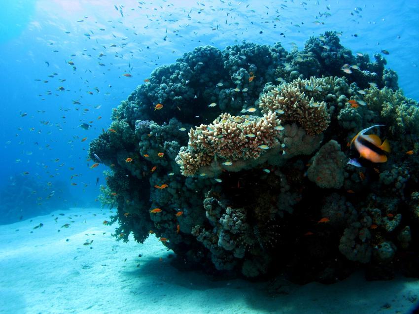 El Quesir, El Quseir - allgemein,Ägypten,Korallenstock,Riff
