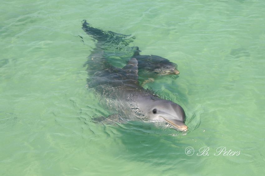 Bahia Naranjo, Bahia Naranjo,Kuba,Delphin,Delfin,Junges,Mutter