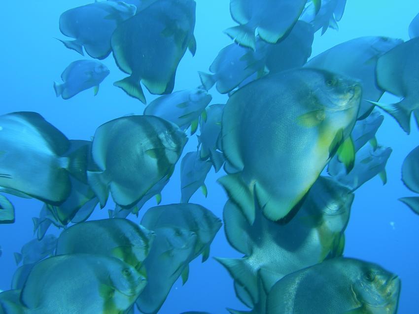Shark & Yolanda Reef, Wrack der Jolanda,Ägypten