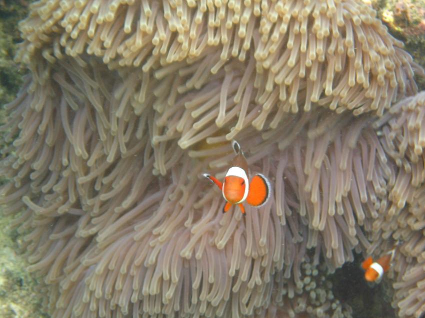 Lanta Divers, Koh Lanta