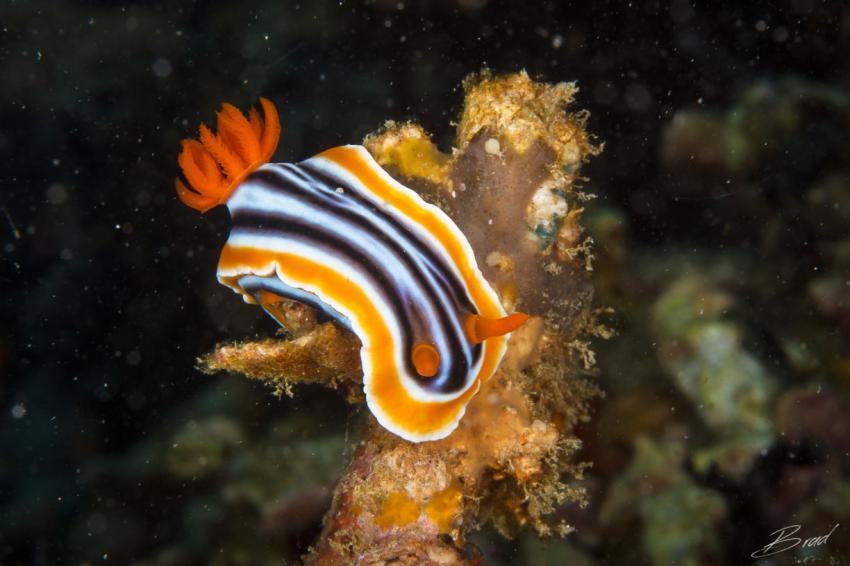 Slow & Easy, Yap, Mikronesien