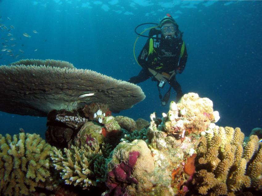 Embudu / Süd Male Atoll