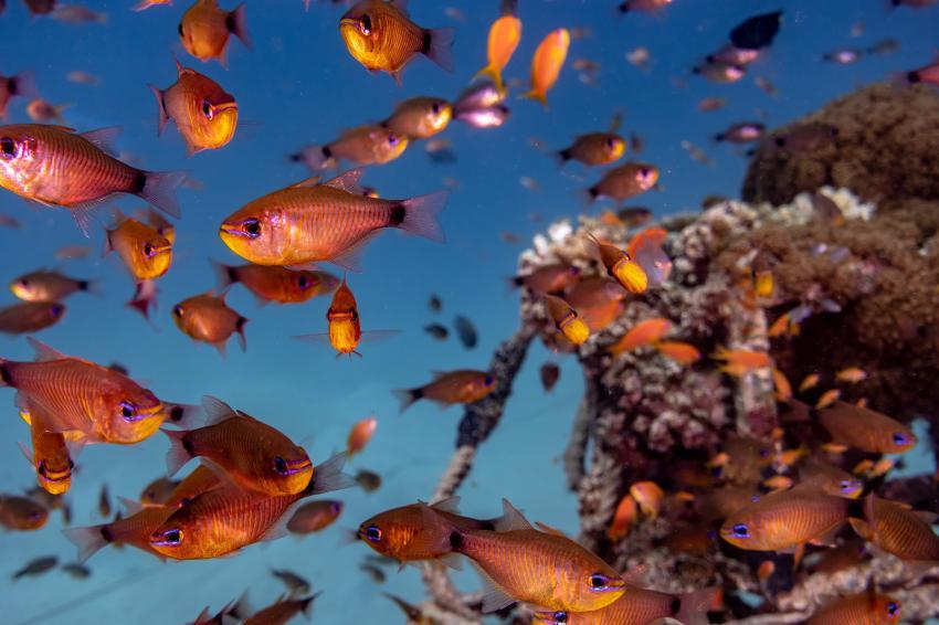 SWD_Hausriff_Madinat Makadi_1, Tauchen Ägypten Makadi Bay, Scuba World Divers Makadi Bay, Ägypten, Hurghada