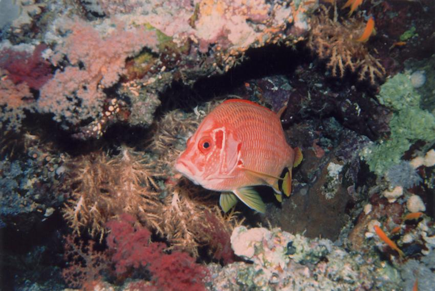 Rotes Meer allgemein, Rotes Meer allgemein,Ägypten