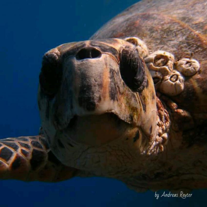 Foto von Renate & Andy, Euro-Divers, Utopia Beach, Ägypten, El Quseir bis Port Ghalib
