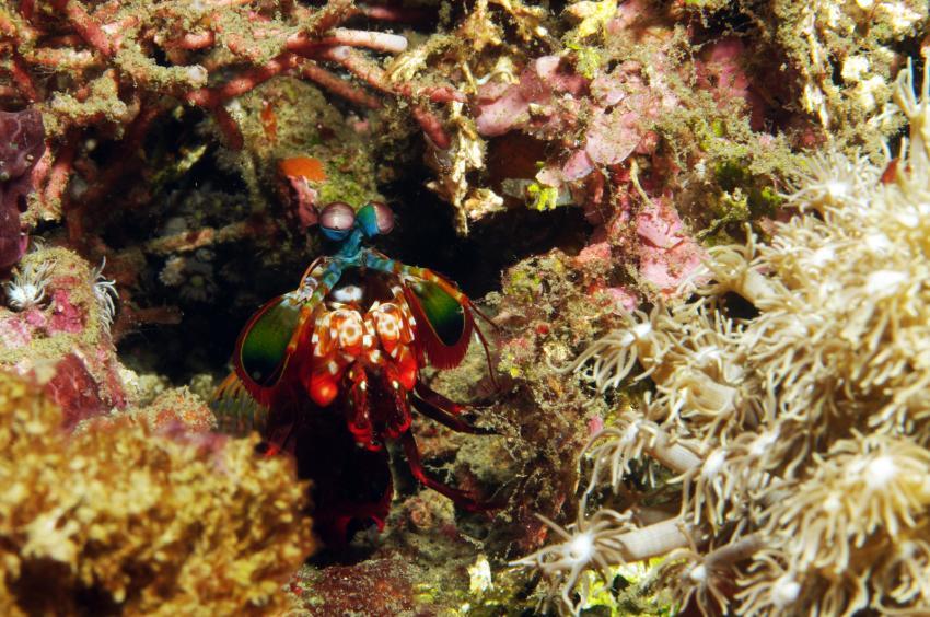 diverse Tauchplätze Juni/Juli 2009, Lembeh Strait,Indonesien