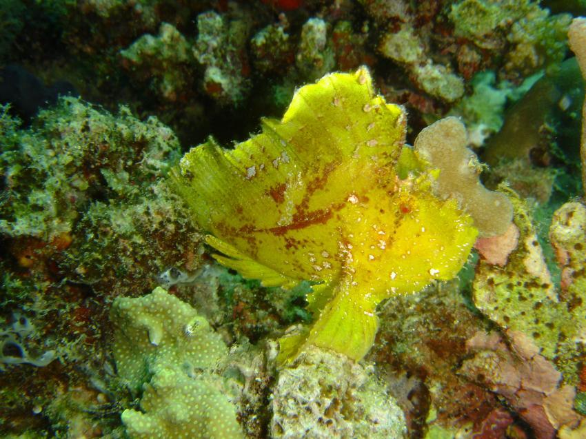 Smart Divers, Mabul