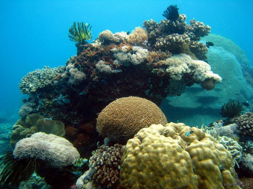Apo Island, Apo Island,Philippinen