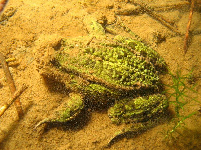 Tergast, Tergast,Niedersachsen,Deutschland,frosch