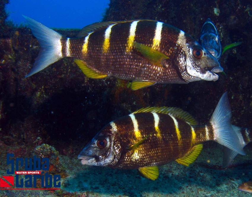 Scubacaribe, Kap Verde Allgemein,Kap Verde