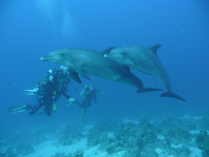 Scuba World Divers Marsa Alam_7, Tauchen in Marsa Alam, Scuba World Divers Marsa Alam, Lagoon View Resort, Ägypten, El Quseir bis Port Ghalib