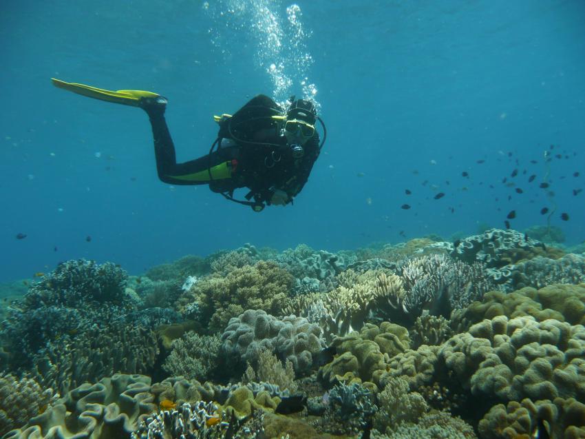 Coco White Beach, Coco White Beach,Philippinen,Taucher,Korallen