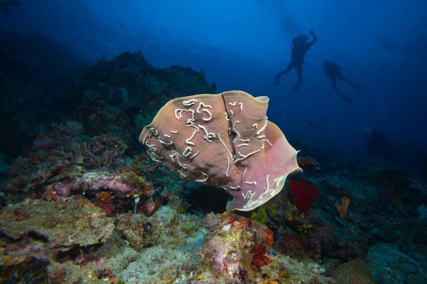 Bei den Walhaien, Southern Leyte,Padre Burgos,Philippinen
