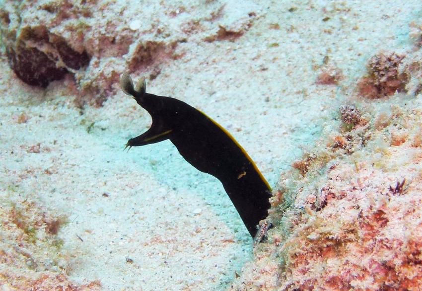 Pro Dive (Hotel Casuarina Trou aux Biches), Mauritius
